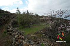 Camino de Montiel #guiadeisora #tenerife #landscape #hikingtenerife #tenerifesenderos #senderismo #trekking #hiking  #sky #nature #outdoors