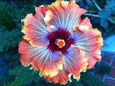 flores exoticas y raras - Buscar con Google