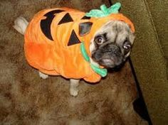 Do I blend in with the pumpkin patch?