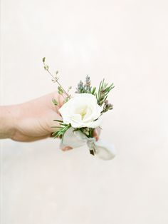 white spray rose bout with rosemary