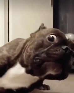 Cute Funny Dogs, Cute Funny Animals, Cute Cats, Cute Animal Videos, Cute Animal Pictures, Cute Dogs And Puppies, I Love Dogs, Funny Animal Jokes, Funny Dog Videos