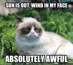 The sun is out! Grumpy cat