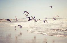 beach, birds, landscape, nature