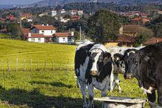 El Alloral de Llanes - Apartamentos rurales en Llanes.  Magníficas fotos (como siempre) en http://www.miguelpereda.com/blog/casa-rural-asturias/