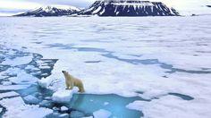 Viajes en Europa: Viaje al archipiélago de Svalbard: osos polares en la ciudad más al norte del mundo Viajes. La cantidad de úrsidos blancos que viven en la zona –y su peligrosidad– han provocado que las leyes prohíban salir de la localidad si no se va armado para poder defenderse en caso de ataque
