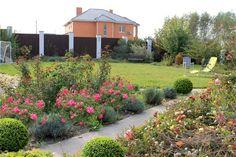 розарий около дома - Поиск в Google