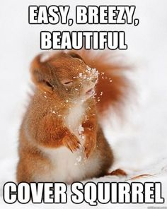easy, breezy, beautiful cover squirrel lol The longer I look it at it, the funnier it gets! Funny Animal Memes, Funny Animal Pictures, Funny Memes, Animal Quotes, Funny Sayings, Animal Puns, Cute Animal Humor, Silly Meme, Animal Captions