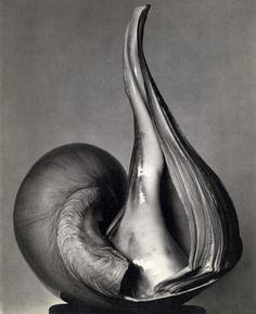 JoeInCT — Photo © Edward Weston