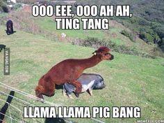 That's one frisky Llama.
