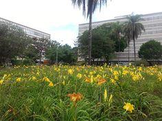 The blocks of Asa Sul / As Super-quadras da Asa Sul
