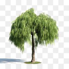식물,녹색 버드나무,나무,청명절 버드나무 Willow Leaf, Willow Green, Autumn Leaf Color, Painted Bamboo, Mask Images, Abstract City, Photoshop, Watercolor Trees, Green Trees