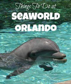 Things to Do and See At Seaworld Orlando Theme Park Florida #Media #SeaworldSummer