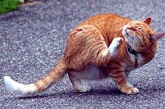 Desparasitacion en gatos