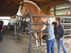 largest horse | Biggest horse in Holmes County