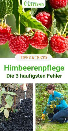 Hydroponic Gardening, Hydroponics, Gardening Tips, Indoor Garden, Indoor Plants, Outdoor Gardens, Hanging Gardens, Herb Garden, Back Gardens
