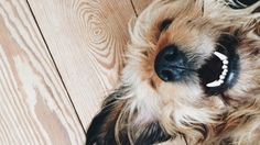 The internet's funniest dog videos will make you LOL-cry