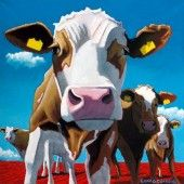 Box Canvas of 'The Leader Of The Pack' by Eoin O'Connor, available in sizes X & X also available in multiple sizes as a framed print Fine Art Prints, Framed Prints, Canvas Prints, Cow Painting, Make You Smile, Farm Animals, Disney Characters, Fictional Characters, Make It Yourself