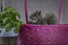 Look what the stork delivered!, #squirrel, #babyanimal