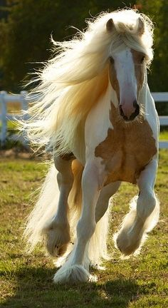Lovely horse with flowing mane and tail .