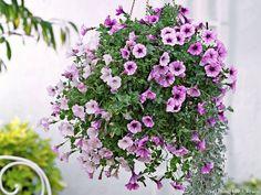 #DIY Recette de terreau maison pour les plantes en suspension