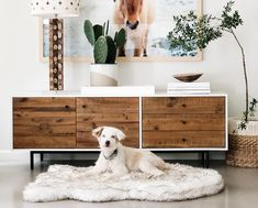 Our ultra-soft, faux fur memory foam orthopedic dog beds are guaranteed not to flatten for 10 years. Give your dog healthy joints and comfort—for all that they give you. Best Orthopedic Dog Bed, Animal Print Bedding, Faux Fur Bedding, Pet Home, Pet Beds, Doggie Beds, Bedding Collections, Memory Foam, Bed Runner