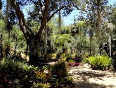 perigo jardim: Os Bromélias, em Lotusland