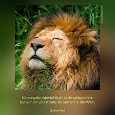 Löwenkraft
