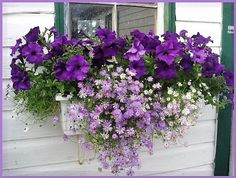 Best Small Yard Landscaping & Flower Garden Design Ideas - New ideas Container Flowers, Container Plants, Container Gardening, Window Planters, Flower Planters, Beautiful Gardens, Beautiful Flowers, Window Box Flowers, Bloom