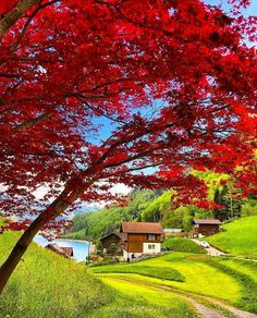 Happy Photography, Nature Photography, Around The World Cruise, Switzerland Travel Guide, Swiss Switzerland, Landscape Photos, World Heritage Sites, Wonderful Places, Peaceful Places