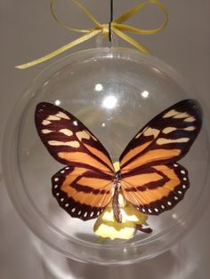 """Lycera cleobaea"" from Argentina             100 mm clear ornament $20.00 US Butterfly Ornaments, Clear Ornaments, Christmas Bulbs, Holiday Decor, Crafts, Argentina, Manualidades, Christmas Light Bulbs, Handmade Crafts"