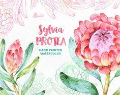 Watercolor floral Clipart wedding by OctopusArtis Clipart, Png Transparent, Protea Flower, Watercolor Flowers, Art Flowers, Watercolor Design, Watercolor Cards, Watercolour Painting, Watercolor Illustration