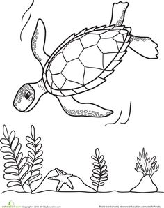 Kinderc  Under The Sea likewise Collection likewise Baseball Coloring Pages 00328826 likewise BirthdayBoyAnyAge as well Pixardisneycars Fillmore Character. on printable elmo coloring pages