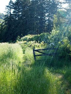 "♡♡Country Life♡♡ Sunlit meadow--""The world calls them its singers and poets and artists and storytellers; but they are just people who have never forgotten the way to fairyland."" ― L.M. Montgomery:"