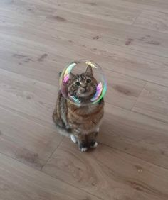 Love Cute Animals shares pics of playful animals, cute baby animals, dogs that stay cute, cute cats and kittens and funny animal images. Cute Little Animals, Cute Funny Animals, Funny Cats, Cats Humor, Funny Drunk, 9gag Funny, Space Cat, Funny Cat Compilation, Photo Chat