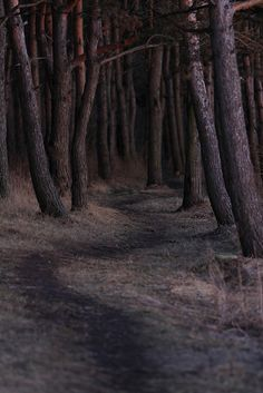 Walk to forest by Antero Haljand, via Flickr
