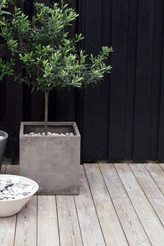 olive tree, oliv tree, concret planter, flower pots, deck, terracotta pots, garden, dark wall, concrete planters