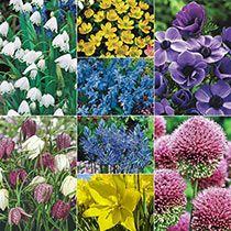 Urban Garden Design Bee And Butterfly Garden Collection - Dutch Gardens, Plants, Wildflower Garden, Flowers, Garden Design Plans, Beautiful Backyards, Flower Garden, Urban Garden, Garden Planning