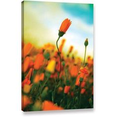 ArtWall Elena Ray African Daisy Gallery-wrapped Canvas, Size: 12 x 18, Black