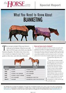 blanketing guide for horses celsius