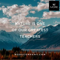 Nature is one of our greatest teachers. Why not use a product that is 100% organic and taken directly from nature? All of our ingredients are listed at Morecompany.com next to each product. We strive to bring you ingredients you can trust.