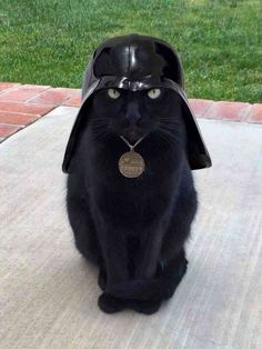 A black adorable kitten in costume of a Darth Vader. It is super cute and funny at the same time.