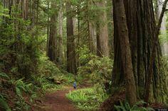 Redwood national park, California, USA.