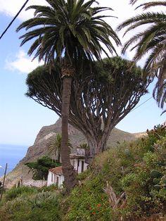 Taganana, Tenerife, Islas Canarias, Spain