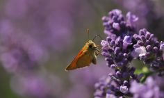 Moth, Insects, Photos, Animals, Pictures, Animales, Animaux, Animal, Animais