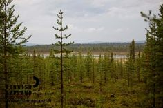 Jerisjärvi in Muonio, in Finnish Lapland. Photo by Jani Kärppä. #filmlapland #arcticshooting #finlandlapland