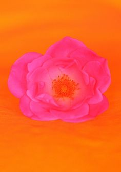 Image discovered by Tammy Shanks. Find images and videos about pink, flower and orange on We Heart It - the app to get lost in what you love. Pink Love, Pink Yellow, Pink Color, Pretty In Pink, Pink And Green, Orange Color, Hot Pink, Orange Art, Bright Pink