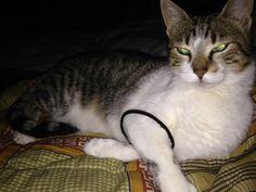 Pitina Cat   Pawshake