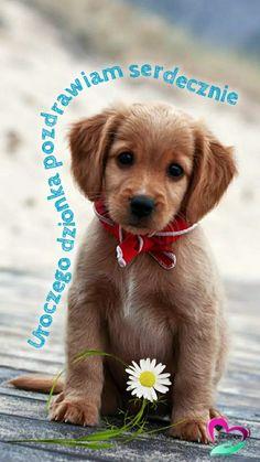 Good Morning, Labrador Retriever, Humor, Dogs, Pictures, Animals, Buen Dia, Labrador Retrievers, Photos
