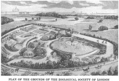 Zoological Society of London, plan of grounds, Regent's Park, opened 1828, wikipedia