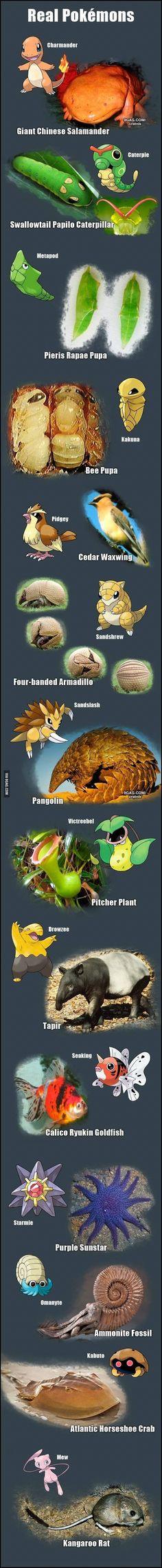 Pokemon in real life